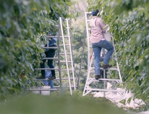A discredited farmworker union falsely claims farmworker pay is being cut