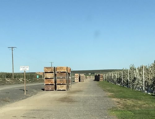"Is a State's Agency's $2 million Fruit Grower Fine an Example of ""Crucifixion"" Enforcement?"